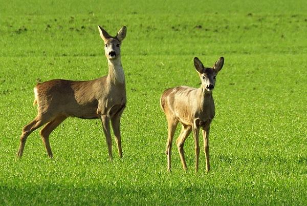 A terület adottságaitól, az állatok szokásaitól és fajtájától függ, hogy a vadriasztó vagy villanypásztor védi meg eredményesebben a földjét - képünk illusztráció