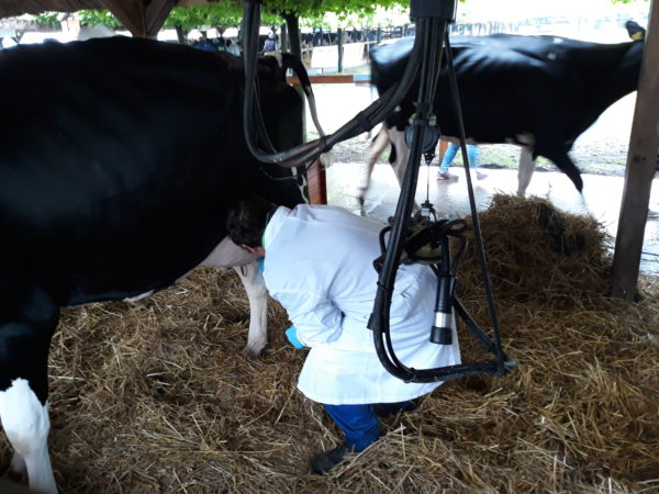 A tejelő tehenészetek számára is új kihívásokat hoz az EU szigorúbb környezetvédelmi szabályozása