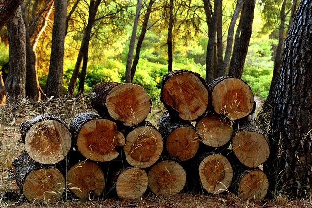 Egyre többször buknak le a fatolvajok és az illegális fakereskedők a Nébih vizsgálatai során