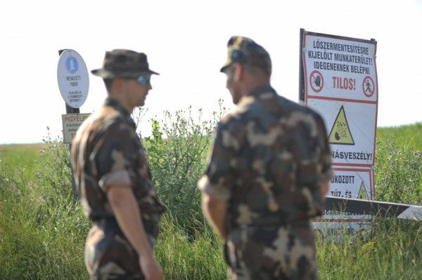 A Hortobágyi Nemzeti Park Igazgatóság területén található egykori bombázólőtér tájrehabilitációja tette lehetővé azt, hogy közel 4 ezer hektáron legeltethessenek a helyi gazdák állatai - Fotó: MTI - Czeglédi Zsolt