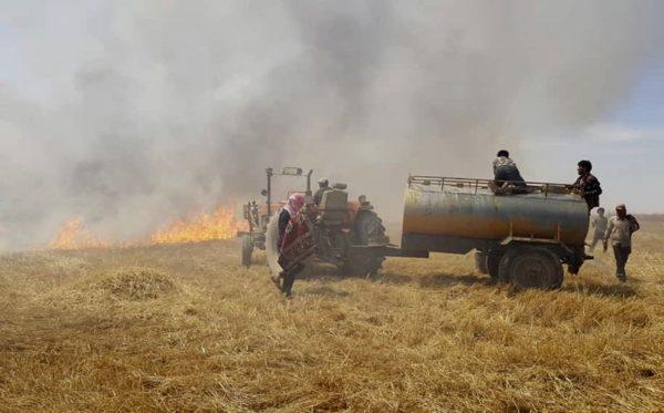 Értelmetlen gabonaégetés - több tízezer hektárnyi élelmiszer pusztul el a háború miatt - Fotó: AP