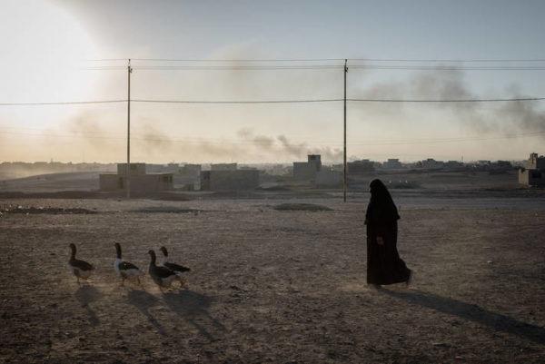 Közel 5 milliárd forintnyi támogatás segíti az iraki Moszul környékén gazdálkodó családokat abban, hogy újraépítsék az ország egykori éléskamrájának számító Ninivei térség mezőgazdaságát - Kép: FAO