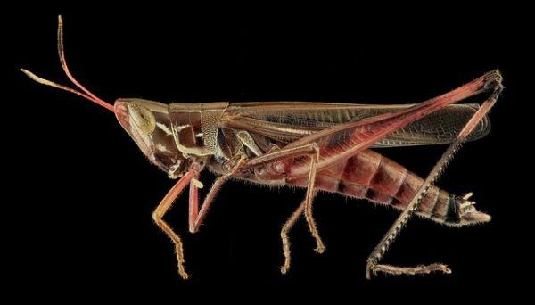Nagyra nőhet az ehető rovarok piaca (Fotó: Pixabay, skeeze)