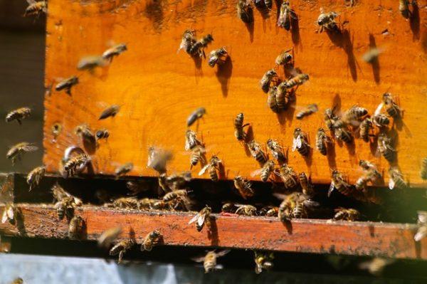 Új, 600 millió forintos méhészeti támogatás érkezik az ágazatba idén