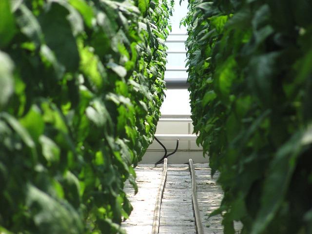 A magyar zöldségtermesztés 6,4 százalékkal kisebb termőterülettel számolhat, mint 2018-ban