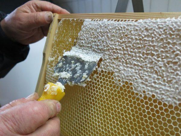 120 millió euró, mintegy 38,6 milliárd forint jut a méhészeti ágazat támogatására 3 év alatt az EU-ban
