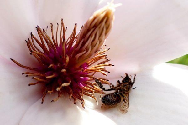 A méhpusztulás mihamarabbi bejelentése nagyon fontos a gyors vizsgálatok és cselekvés érdekében