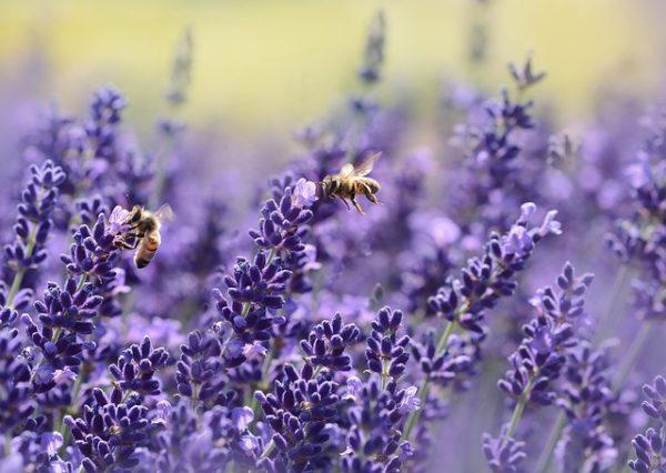A méhegészségügyi támogatás méhcsaládonként 500 forintot jelent a méhészeknek
