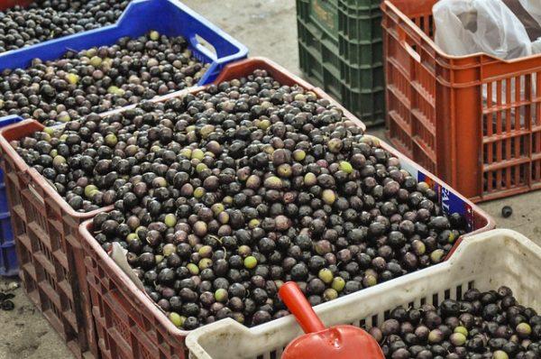 Az élelmiszerhamisítók szigorúbb büntetésre és ellenőrzésekre számíthatnak a jövőben - képünkön olívabogyók, illusztráció