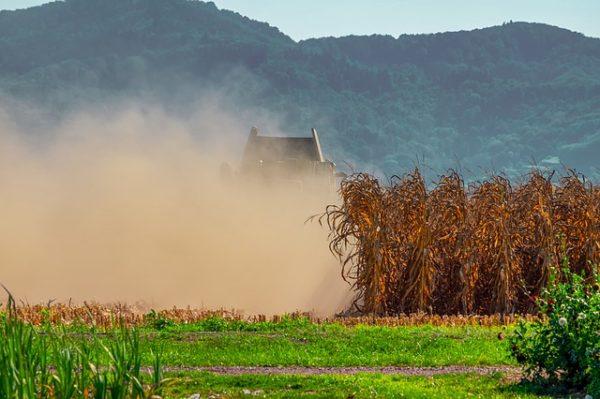 Jól jöhet ki a szezon végére a változékony időjárás okozta szerencsejátékból az Árpád Agrár Zrt. - képünk a kukorica aratásáról illusztráció