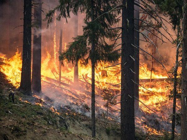 Hosszú évtizedek múlva jöhetnek csak helyre a leégett szibériai erdők - képünk illusztráció