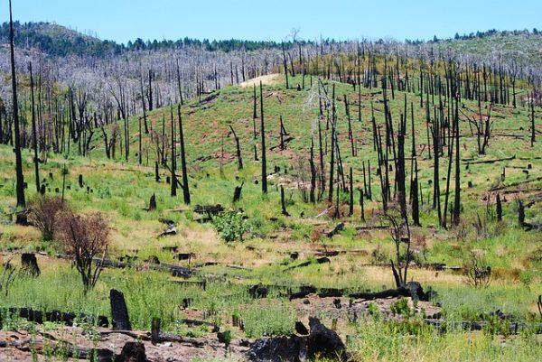 Hatalmas területet veszített el az Egyesült Államokban található vadon - csaknem 10 millió hektár pusztult el 16 év alatt az emberi tevékenységek következtében