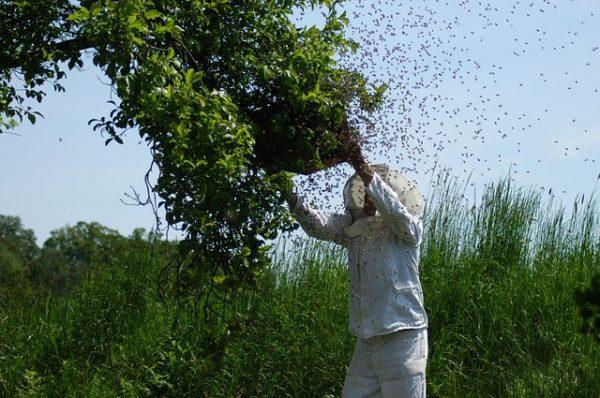 A méhészeti támogatások növelése segíti az ágazat versenyképességét - képünk illusztráció
