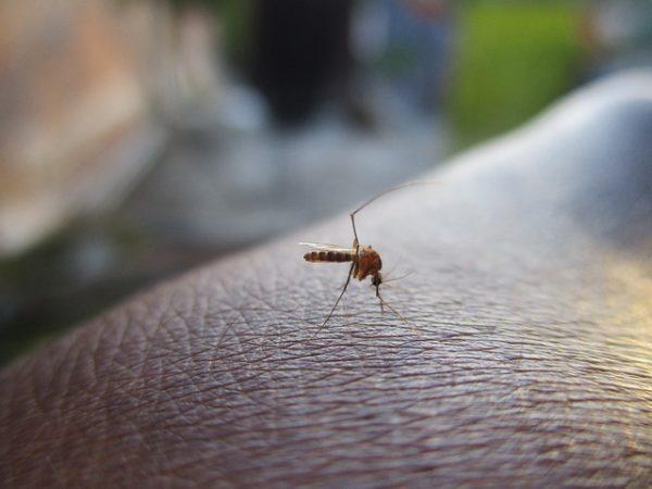 Nyáron sokat küzdünk a szúnyogok ellen, de melyik módszerek válnak be ellenük igazán?