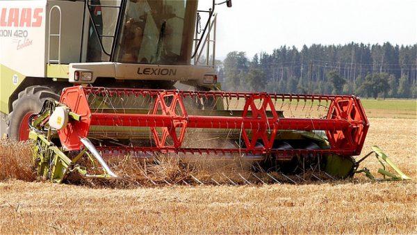 A hazai betakarítás adatairól készített statisztikai jelentést a NAIK AKI, több gabona termésátlaga is jókorát változott - képünk illusztráció