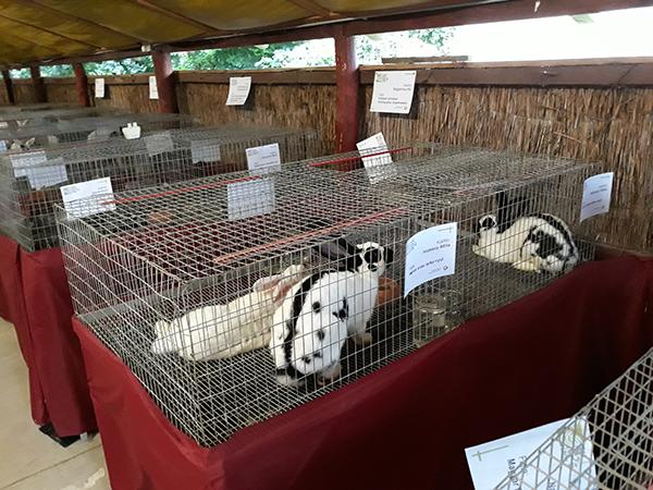 Egyre felkapottabb a nyúlhús a világon, Magyarországon viszont még elenyésző a fogyasztók száma