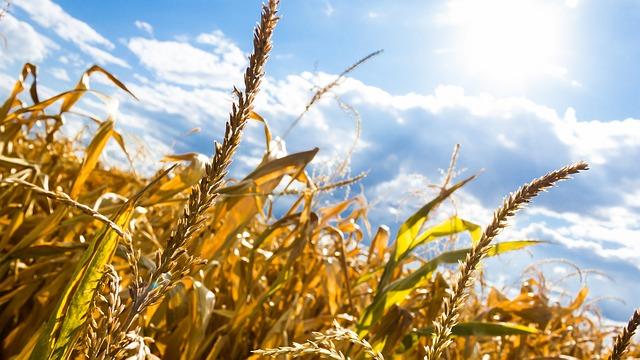 Megjelent az agrárminiszter aszályközleménye (Fotó: Pixabay, RemazteredStudio)