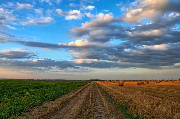 Jövő szerdán indul az agrártámogatások előlegfizetése (Fotó: Pixabay, wobogre)
