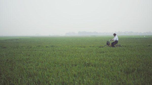 Komoly feladat az agráröröklés kérdéseinek rendezése, de szükséges az ország mezőgazdaságának versenyképessége miatt - képünk illusztráció