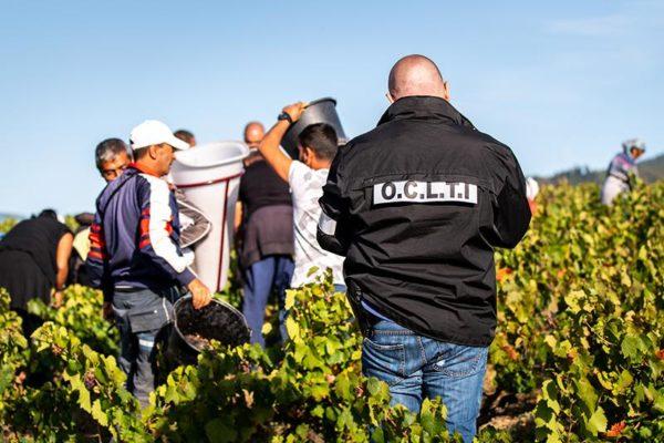 167 agrármunkás dolgozott illegálisan a francia szőlőkben, Lyon környékén - Fotó: Europol