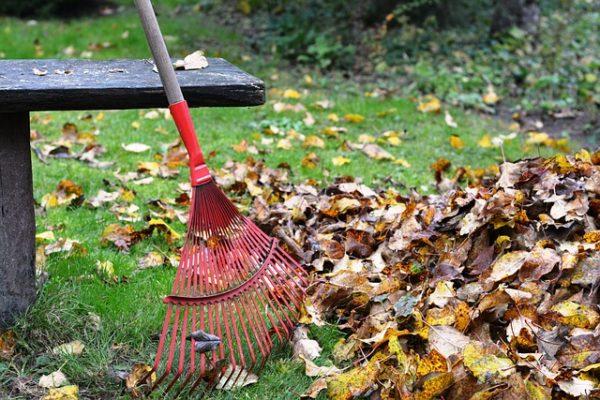 A legjobb, ha a lehullott levelek ott maradnak, ahol a természet rendezi őket