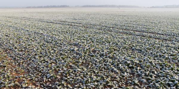 Fagyott állomány kora télen (Fotó: Generali Biztosító)