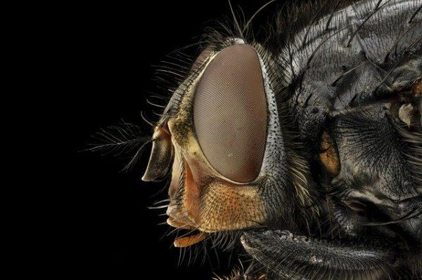 1970 óta az összes rovar fele kihalt a természetpusztítás és a növényvédő szerek használata miatt (Fotó: Pixabay, skeeze)
