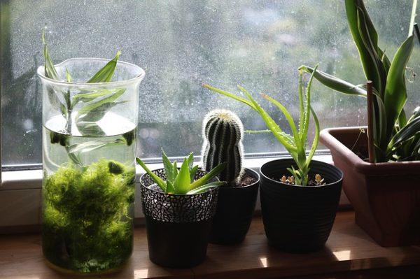 A szobanövények téli tartása nagy odafigyelést igényel (Fotó: Pixabay, Admiral_Lebioda)