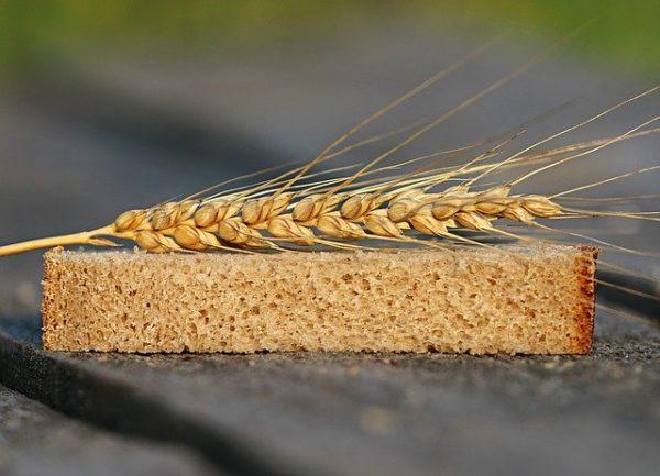 Az élelmiszertermelés adatait elemző FAO dokumentum a gabonafélék erősödő szerepéről számolt be