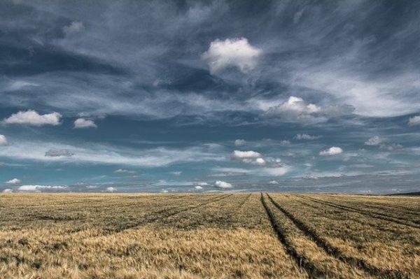 A magyar mezőgazdaságot sújtó nehézségekről és azok megoldási lehetőségeiről is szólt a szakmai fórum Szolnokon - képünk illusztráció