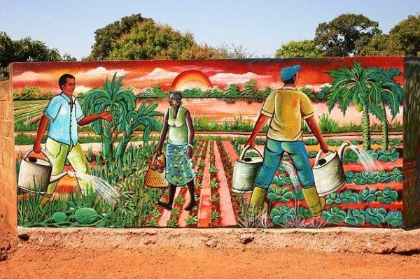 Magyar mezőgazdasági technológiák segítségével fejlődhet az afrikai növénytermesztés - képünk illusztráció