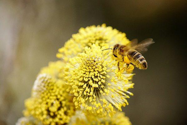 A növényvédő szer engedélyezési folyamaton változtatna a méhekre kockázatot jelentő készítményekkel kapcsolatban az EP