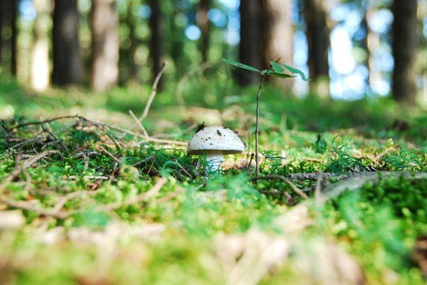 Gombák segítségével lehetne olyan új gabonafajtákat létrehozni, amelyek jobb tápanyagfelvételre képesek és kevesebb a műtrágyaigényük - képünk illusztráció