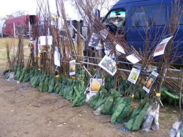 Hamis oltványok tömegére bukkant a Nébih Dunaföldváron és Kecskeméten - Fotó: Nébih
