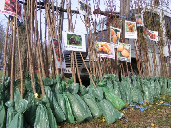 Ezernél is több hamis gyümölcsoltványt foglaltak le - Fotó: Nébih