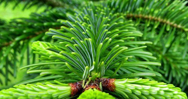Az élő fenyőfán akár 25 ezer élőlény is előfordulhat (Fotó: Pixabay, s-ms_1989)