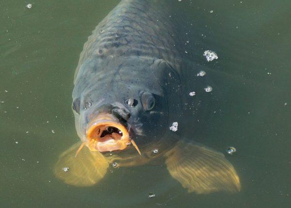Sorra lopják a halakat a magyar tavakból (Fotó: Pixabay, webandi)