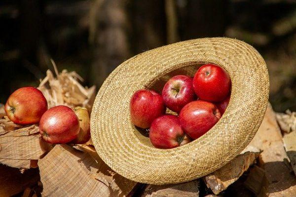 Továbbra is az alma a magyarok kedvence
