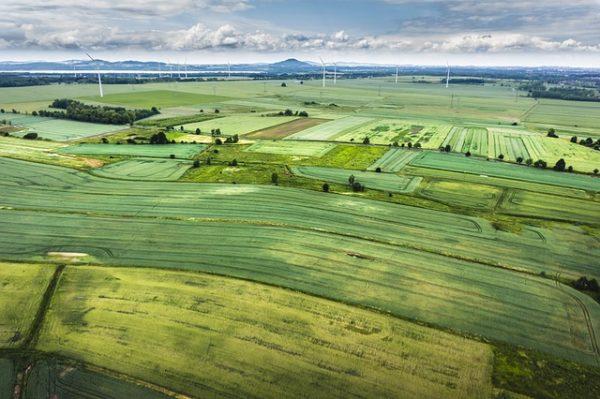 A világon megtermelt kukorica és búza mennyiségének és árának járt utána a NAIK AKI PÁIR agrárpiaci jelentése - képünk illusztráció