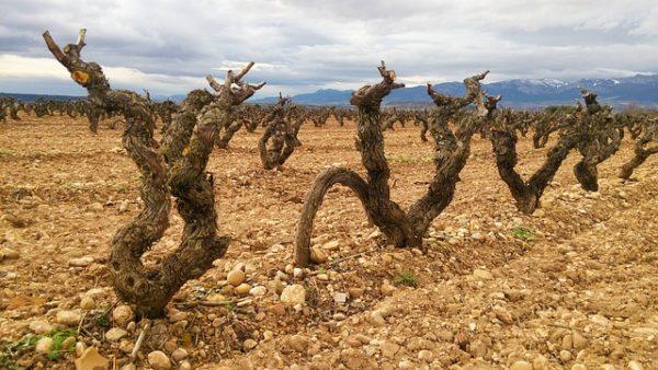 A spanyol borászat is változtatni kényszerül a szélsőséges időjárási körülmények miatt - képünk illusztráció
