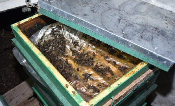 A méhekkel együtt találták meg a lopott kaptárakat a rendőrök - Fotó: Police.hu