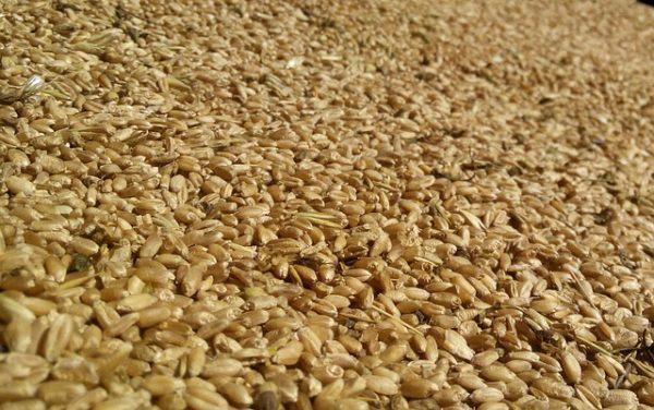 200 millió forint adót csaltak, és buktak a komáromi gabonakereskedők - képünk illusztráció