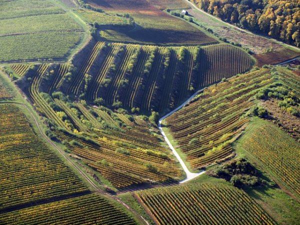 Örülhetnek a villányi bortermelők, mert jó évjárat lesz a 2019-es szüretből