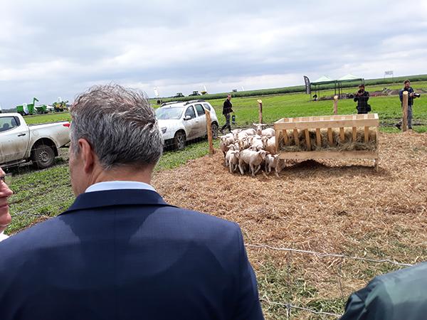 Az agrárminiszter a juhágazat támogatásáról is beszélt