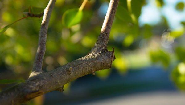 A legjellemzőbb kerti tevékenység februárban a gyümölcsfák tavaszi metszése (Fotó: Pixabay, kylie1)