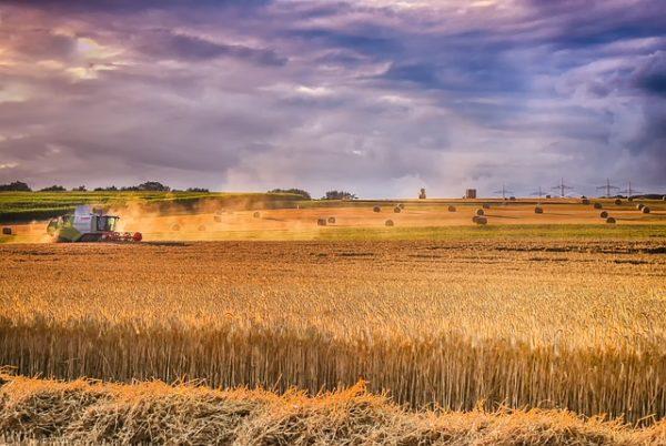 Elérte a 154 millió tonnát az Európában betakarított búza mennyisége