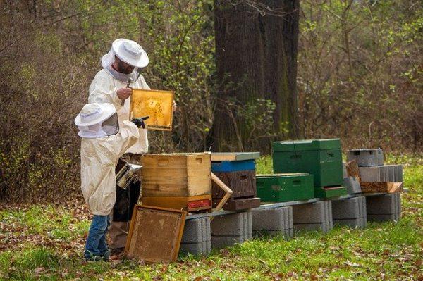 A méhészek nélkül összeomolhat a mezőgazdaság az OMME elnöke szerint - képünk illusztráció