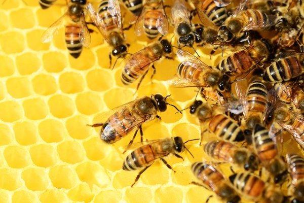Nem zártak jó évet a méhészek 2019-ben a méhészelnök szerint