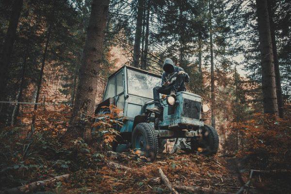 Egy román erdész pályázhatna a fatolvajok fejedelme címre, miután a vád szerint egy hónap alatt lopott el 540 kamionnyi fát - képünk illusztráció