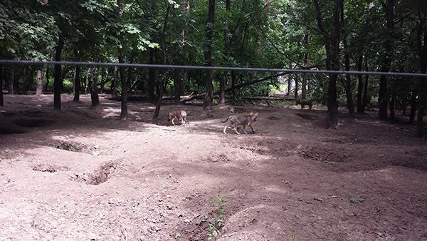 Több, új kihívással is szembesült az elmúlt időszakban a magyar vadgazdálkodás - ilyen a farkasok egyedszámának növekedése - képünkön farkaskölykök láthatók